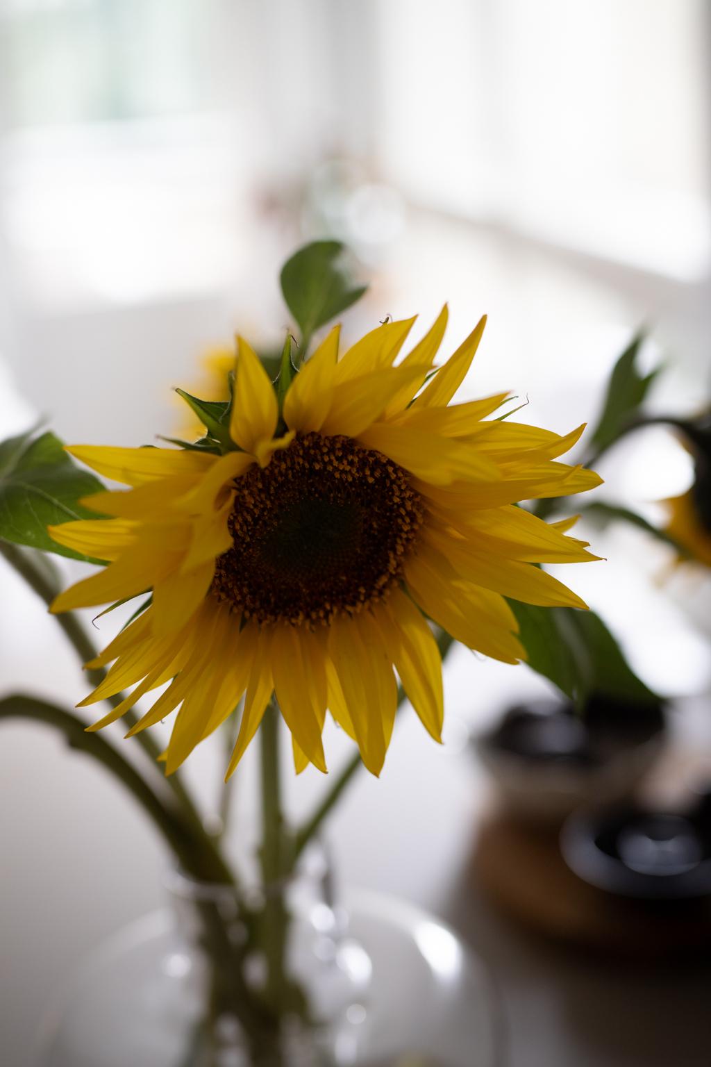 Anne Melender Auringonkukat 3